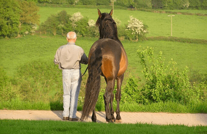 Equine Facilitated Coaching at Orchard House Partners